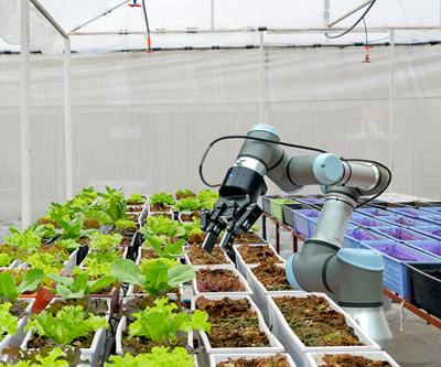 robotic in garden